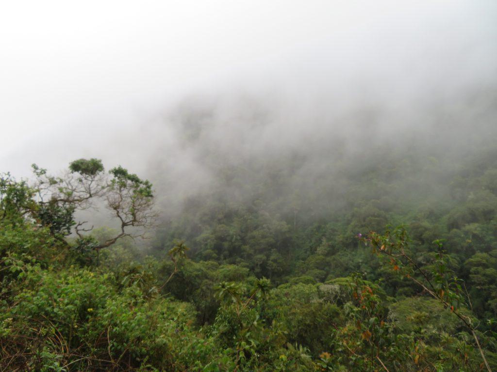 Guide to the Salkantay Trek | Jungle