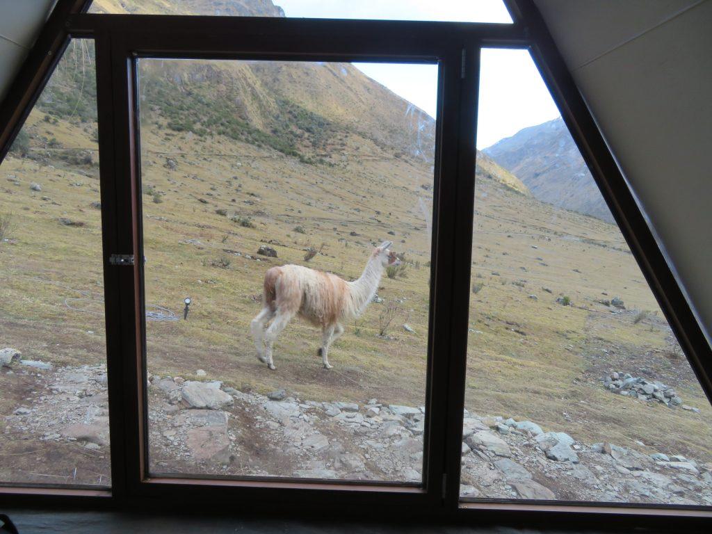 Guide to the Salkantay Trek | Llamas