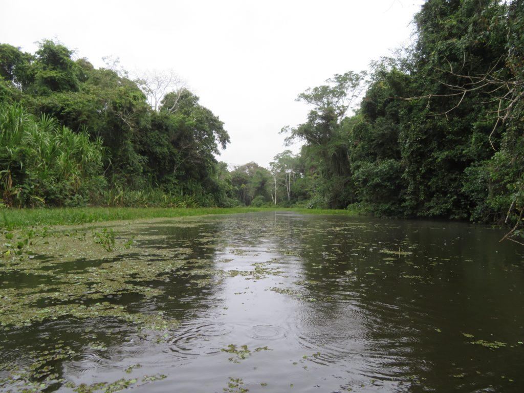 Amazon Rainforest | Rain