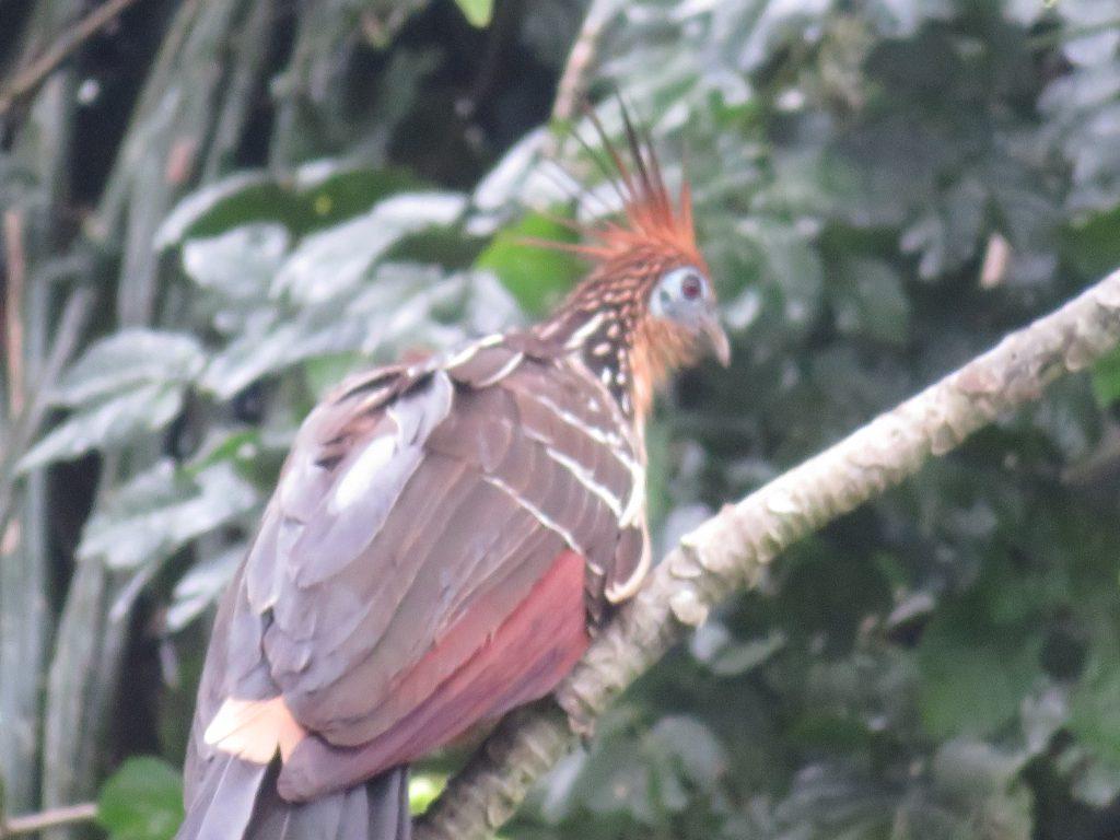 Amazon Rainforest | Serere