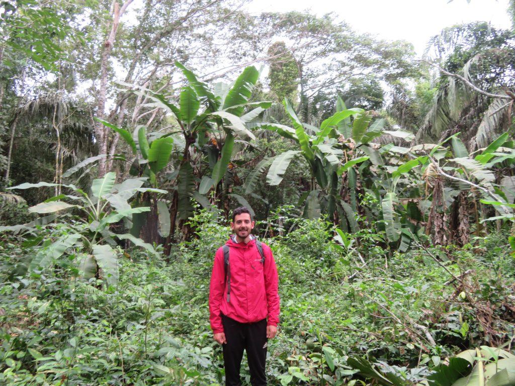 Amazon Rainforest | Banana Plantation