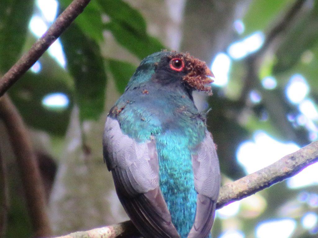 Amazon Rainforest | Birdwatching