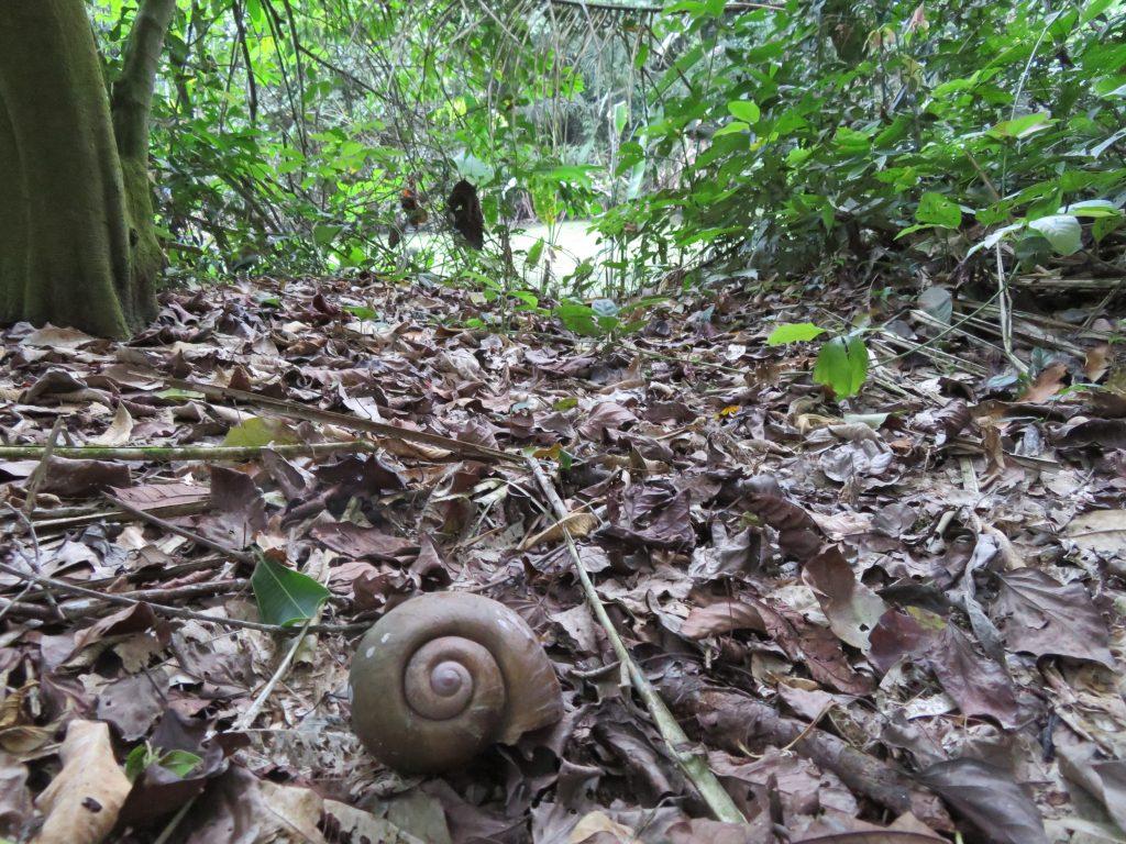 Amazon Rainforest | The Amazon